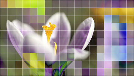 Crocus flower with mosaic effect.