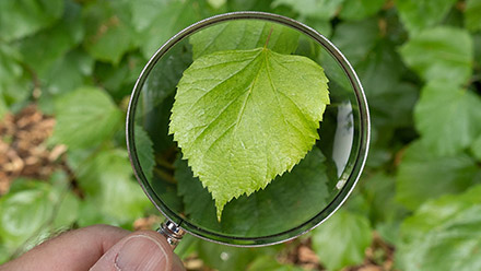 Magnifying glass and leaf composite.